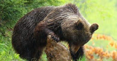 Výprava za medvědy.