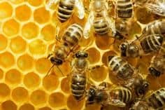Včelaři v regionu vykrádají kolegy, včely jsou drahé
